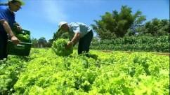 a_pequenos agricultores